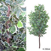 Дерево искусственное Фикус 190 см / JWT2667 /уп 12/без основания