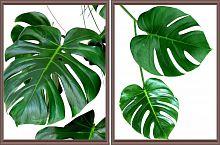 Постер из двух картин Ботаника 30х40 см