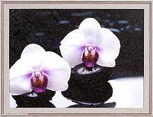 Репродукция картины 30х40 Дикие орхидеи / SD241 / CH8107-1 /